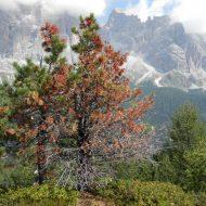 """Comunicato a seguito secondo incontro """"Tempesta vaia, i boschi fragili raccontano il cambiamento climatico"""" Pieve di C. 18-01-019"""