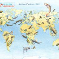 Domenica 27 Settembre Giornata mondiale della migrazione dei pesci